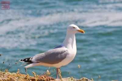 concours oiseaux