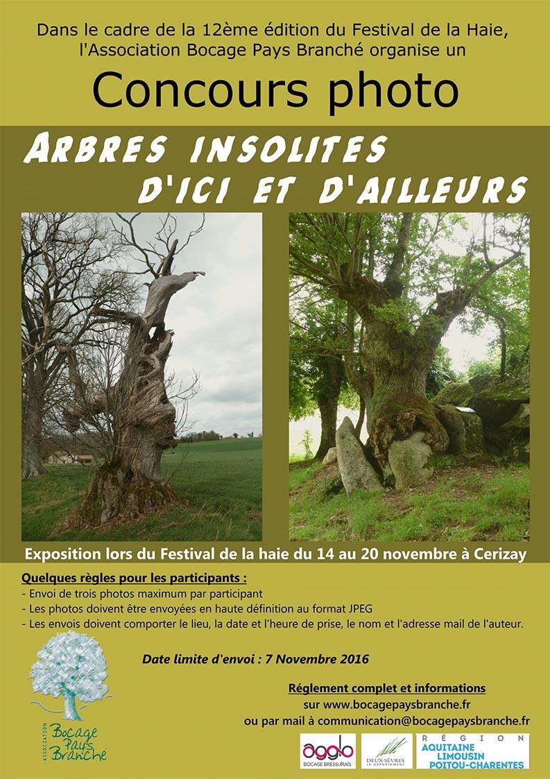 Affiche concours photo-arbres